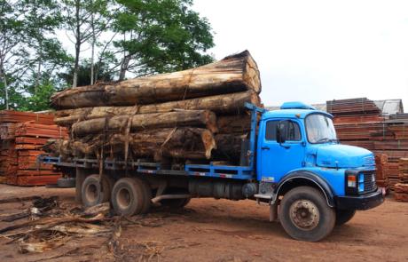 Holzstämme auf dem Transport