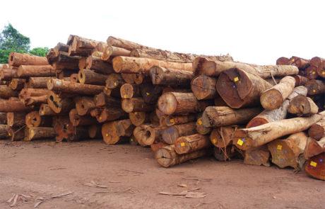 Lagernde Holzstämme