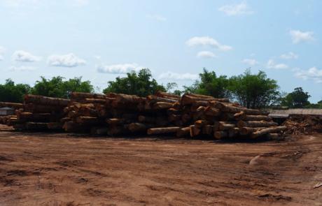 Lagerndes Holz