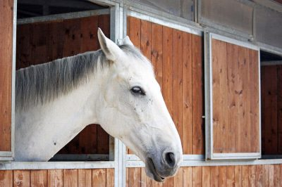 pferdestall selber bauen