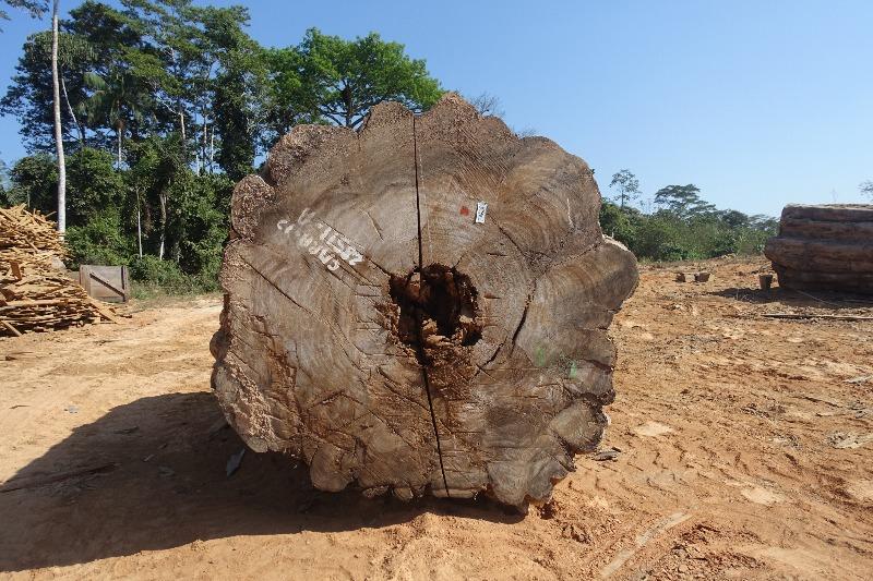 Tropisches Holz