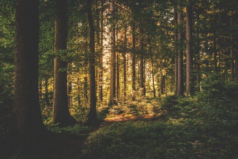 FSC Wald