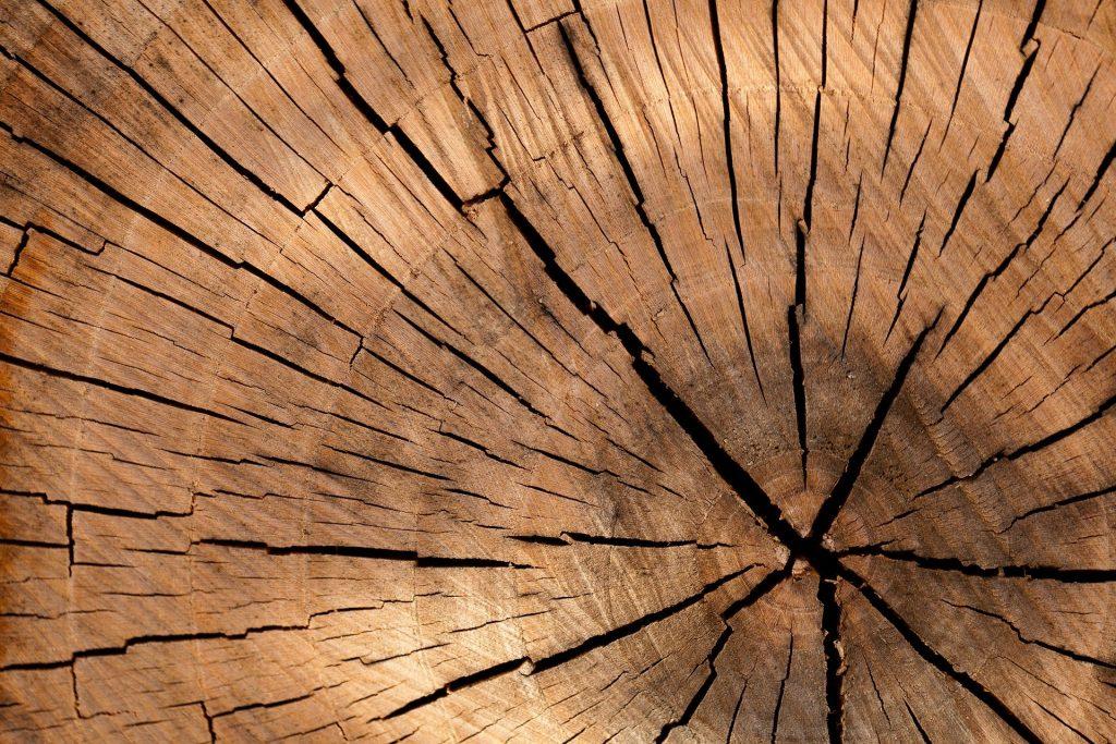 Holz Nahansicht