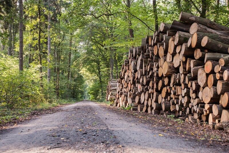 Holz von A bis Z